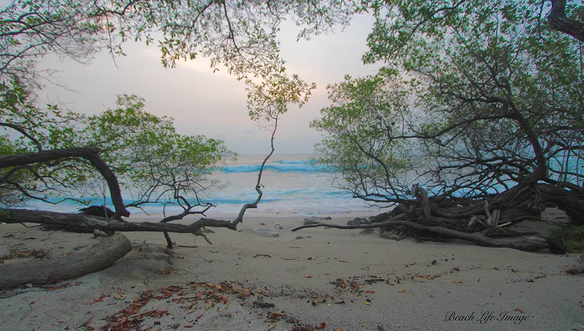 carolinadelmar-beachlangosta-langosta