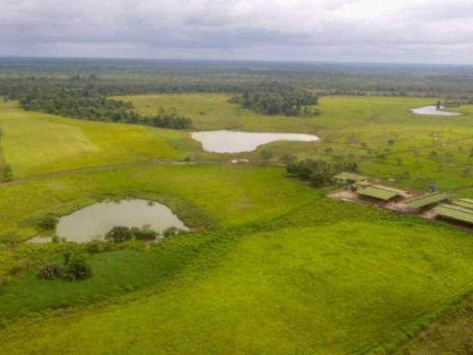 Tropical-Buffalo-Ranch-with-Modern-Lucrative-Dairy-Facility-04