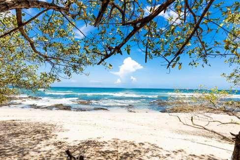 monomalo-beachtreesshade-langosta