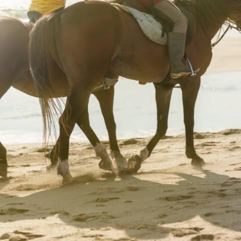 Horse Back Riding Costa Rica